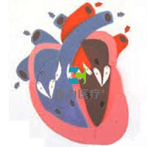 """吉安""""康为医疗""""心脏收缩、舒张与瓣膜开闭演示模型"""
