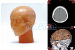 CT头部血管造影模型,产品编号:PH-3