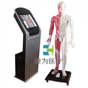 """""""康为医疗""""22寸多媒体人体针炙穴位交互数字平台"""