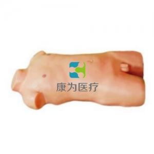 """""""康为医疗""""儿童股静脉与股动脉穿刺训练模型(升级版)"""