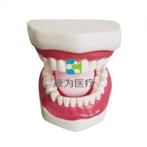 """""""康为医疗""""正常大小口腔护理操作模型(带舌)"""