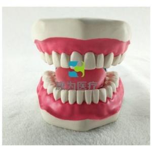 """""""康为医疗""""口腔清洁操作模型(带舌),牙护理保健模型(放大五倍)"""