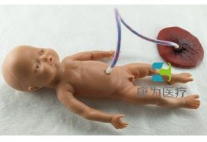 """""""康为医疗""""高级新生儿脐带护理模型,脐带护理模拟人"""